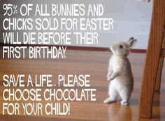 Bunnies (and other animals) are living, breathing commitments. They live 8-10 years (sometimes more).... Please, if you can't take care of another life, choose chocolate or a stuffed animal.