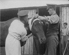 Equine casualties was shocking. On 1 day at Battle of Verdun in 1916, 7000 horses were killed by shelling. By 1917, Britain had over a million horses in service,when over Britain alone had lost 484,000 horses.In total, over 8 million horses perished during the war. Many a result of extreme conditions,exhaustion, drowning and disease. Vet hospitals were set up to help horses recover from shell shock & battle wounds.BA Vet Corps treated 725,216 treated, successfully healing at least 529,064.