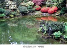 Blooming azalea reflects in a pond in japanese garden Portland Oregon USA Stock Photo