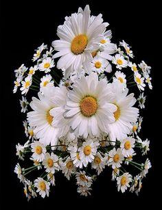 """Força da Mente """" Visualize uma flor aberta com pétalas amplas e belas, assim deve estar sua vontade, aberta e bela, visualize um campo amplo de muita paz, assim deve estar a sua alma serena e leve, visualize toda correria do dia anterior, todas dificuldades e pesos da semana, deixe o vento levar, deixe o tempo responder, guarde dentro de si apenas o bem-estar, a boa palavra, a força da confiança, a beleza e o perfume da Natureza, e acorde para um novo amanhã."""" Dra. Miriam Zelikowski"""