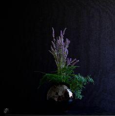 Ikebana di Luca Ramacciotti (vaso Sebastiano Allegrini) ispirato al profumo M.O.U.S.S.E di Oliver & Co. - Perfumes #profumo #perfume #floral #florist #floralart #floristry #生け花 #草月 #いけば #sogetsu #sogetsuryu #sogetsuschool