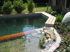 Teich/ Natural Swimming Pool