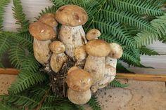 I funghi di Calagusto sono prodotti dall'azienda Serfunghi Serfunghi . Le migliori lavorazioni di #funghi della #calabria  Scoprili su http://www.calagusto.com/prodotto/misto-funghi-bosco-con-porcini/   #risotto #funghi #porcini #calabria #funghi #cibo #ricette #tagliatelle #rositi #muschio #ricette