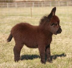 Esses 15 burros bebês são tudo que você precisa ver hoje - Histórias com Valor