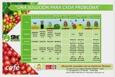 Finca Cafetera Santander - Edición N. 18 by Comité Café Santander - issuu