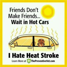 Leave your pets at home! If you must go out in the heat with them, make sure they are always with you!