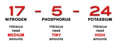 When looking for the best fertilizer for hibiscus, look for this ratio: Medium Nitrogen (N) - Low Phosphorus (P) - High Potassium (K). Hibiscus Tree Care, Hibiscus Flower Drawing, Growing Hibiscus, Hibiscus Leaves, Hibiscus Plant, Growing Flowers, Flower Drawings, Fertilizer For Plants