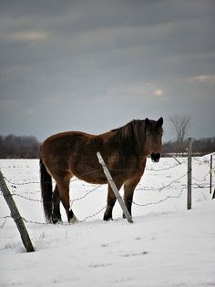 Horse in Winter / Evocative Scene of Horse with by PhotoClique