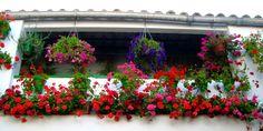 Patios 2012 - Balcony