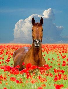 #Животные, #Цветы, #Лошади, #аватары, #картинки, #фото, #авы, https://avatarko.ru/kartinka/29548