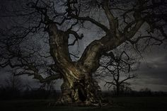 Breathtaking Pictures of Ancient Trees Among Starry Skies