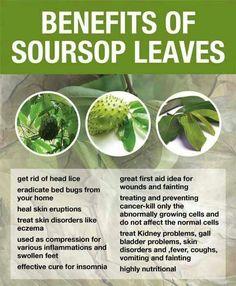 Benefit Soursop Leaves #natural #health #remedies