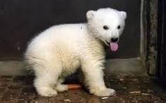 Image result for fantasy bear cub