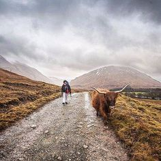 #LPfanphoto from @cloetclem whilst hiking in #Scotland from Tyndrum to Inveroran. A two horned friend decided to saddle up next to them and join them for a stroll! Each Friday we regram an #lpfanphoto. Tag yours for the chance to be featured. #wildlife