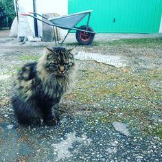 La faccia da weekend di Tony, perché noi facciamo conclusione e lui non può dormire come vorrebbe   😁  Buon #weekend a tutti  😀  https://www.instagram.com/p/BSoB8i0AjoW/  #cats #cutecats #sweetcats #lovelovelove #lovecat #cats #pets #animals #photooftheday #ilovemycat #nature #catoftheday #lovecats #catsmylove #gatti #ioamoglianimali #MIAO :-)