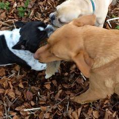 French Bulldog, Instagram Posts, House, Animals, Animales, Home, Animaux, French Bulldog Shedding, Bulldog Frances