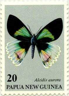 Conservación de la fauna, mariposas: Alcidis Aurora Alcidis aurora 29/08/1979 Papúa y Nueva Guinea
