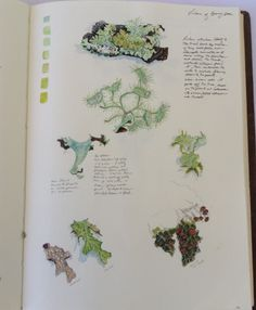 Page from my sketchbook journal on lichens from Bonny Doon.