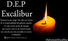 #DEPExcalibur #DEPEXCALIBUR #RIPEXCALIBUR #rip #dep #excalibur www.facebook.com/hermosanaturaleza2 →instagram : @hermosa_naturaleza_ig  #sad #triste #noticia #tristeza #muerte #dead #kill #lightsout #lights #candle #velas #luz #amor #love #dogs #perros #animals #animales #pets #mascotas #family #friends #ebola