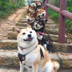 take photos #QQPETS #dog #doglovers
