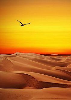 Rub Al Khali Desert. The world's largest sand desert. It belongs to the Arabian Desert. It's located in Saudi Arabia, Oman, the United Arab Emirates and Yemen. Asia.