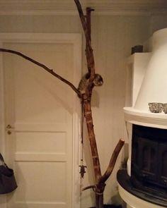 My own tree inside :)
