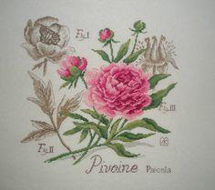 Моя серия ботаника от Veronique Enginger . La Pivoine. Пион.