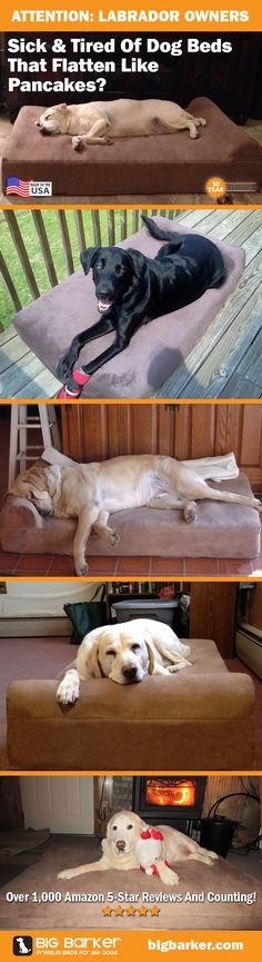 Labrador dog bed by Big Barker... America's most luxurious dog bed for big dogs like the Labrador | See more pictures at http://bigbarker.com