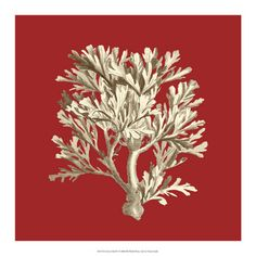 World Art Group, Coral on Red IV