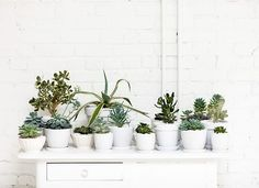 White pot plants
