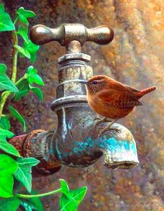 .I think you be a Carolina Wren or in the Wren family and I hope the one in my yard never leaves!!!!!!!!!!!!!!!!!!