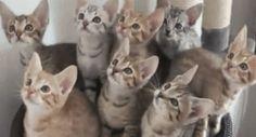 Kittens Watching Tennis :)