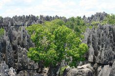 Tsingy, la forêt de pierres : 50 lieux exceptionnels que vous n'avez jamais vus - Linternaute