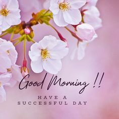 Latest good morning images with flowers ~ WhatsApp DP, Love DP, DP Images, WhatsApp DP For Girls Good Day Images, Good Morning Photos Download, Good Morning Beautiful Pictures, Latest Good Morning Images, Good Morning Nature, Good Morning Images Flowers, Good Morning Image Quotes, Morning Pictures, Good Morning Greeting Cards