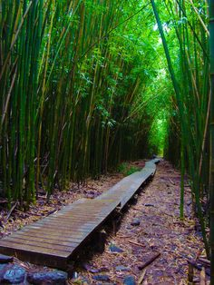 bamboo forest on Maui, it is beautiful walking through the bamboo and sometimes a little eerie hearing the bamboo clack together when the wind blows.