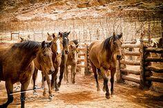 Horse Photography  South Western Inspired Fine Art by AsqewCreative  #horses #southwestern #asqewcreative