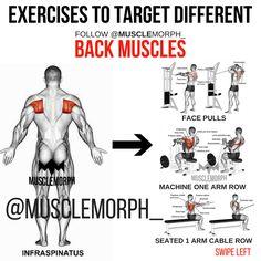 BACK EXERCISE MUSCLEMORPH https://musclemorphsupps.com/