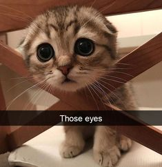 Love Cute Animals shares pics of playful animals, cute baby animals, dogs that stay cute, cute cats and kittens and funny animal images. Cute Baby Cats, Cute Little Animals, Cute Cats And Kittens, Cute Funny Animals, Kittens Cutest, Kitty Cats, Funny Cats, Siamese Cats, Cats Humor