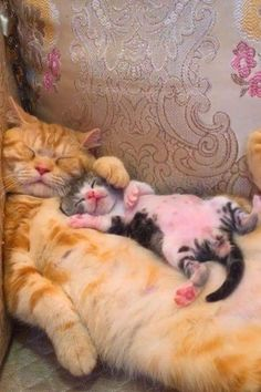 Sleeping beauties,watch till last 😺😂😂 - Cool Cats - tierbabys Cute Little Animals, Cute Funny Animals, Funny Cats, Funny Humor, Silly Cats, Memes Humor, Cat Memes, Cute Cats And Kittens, Kittens Cutest
