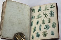 Old Books & Things.., wonderful antique botanical manuscript illustrated with original water colours dated 1823