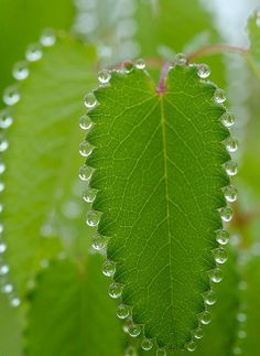 Dewdrops on a leaf- photo by mohammed mohammed on Flickr