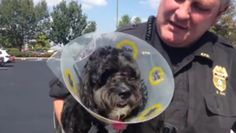One EPD officer holds the dog after the rescue (WFIE)