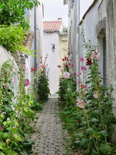 hollyhocks, Ile de Re, France
