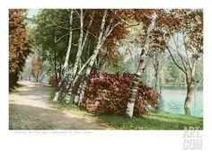 Birches, Lake Como Park, St. Paul, Minnesota Art Print at Art.com