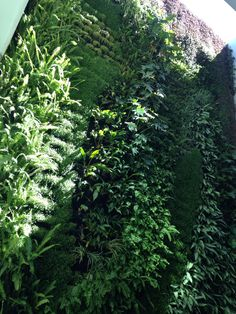 Muro verde jardin vertical living wall green wall