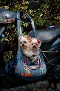 50 Snapshots Of Fashionable Japanese Dogs