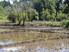 ANDRANOVORY  .Water on the  field ready to plant the rice