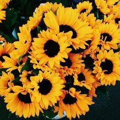 Imagem de flowers, sunflower, and yellow
