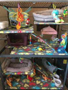 Pet Accessories Diy Rat Toys Ideas For 2019 Ferret Toys, Baby Ferrets, Pet Ferret, Cute Ferrets, Cute Rats, Rat Cage Diy, Pet Rat Cages, Pet Cage, Cage Chinchilla