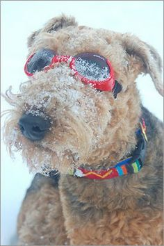 For The Love of Dogs in Winter